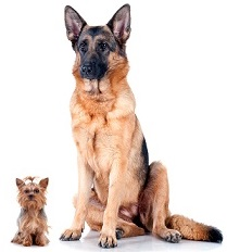 dogs small and big