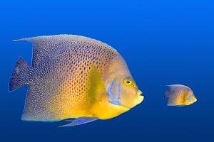 Big fish small fish